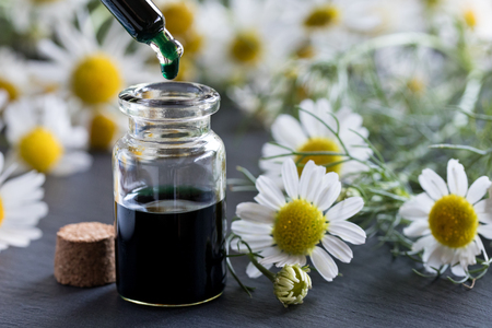 A drop of dark blue chamomile essential oil is being dropped into a bottle, with fresh chamomile flowers in the background