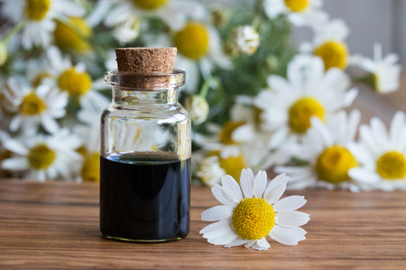 A bottle of dark blue chamomile essential oil with fresh chamomile flowers on a wooden background Stock Photo
