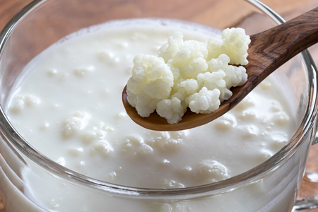 Kefir grains on a wooden spoon above a jar of homemade milk kefir Imagens