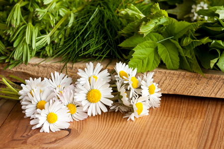 Daisies and other wild edible plants growing in spring - bedstraw, ground elder (Aegopodium podagraria), wild chives, on a wooden background