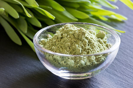Young barley grass with green barley grass powder on a dark background Stock Photo