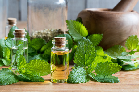 A bottle of melissa (lemon balm) essential oil with fresh melissa leaves in the background Archivio Fotografico