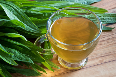 Plantain tea with fresh ribwort plantain leaves in the background Standard-Bild