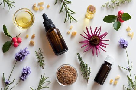 Flessen etherische olie met rozemarijn, tijm, kruipende tijm, echinacea, wintergroen, lavendel, mirre en wierook op een witte achtergrond Stockfoto