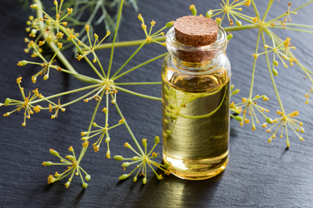 A bottle of dill seed oil with fresh dill in the background