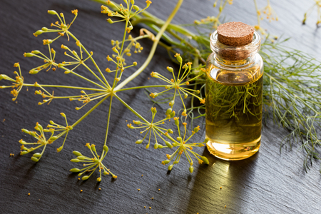 Dill seed oil in a transparent bottle with fresh dill in the background