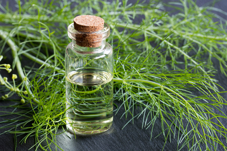 A bottle of fennel essential oil with fresh fennel tops in the background