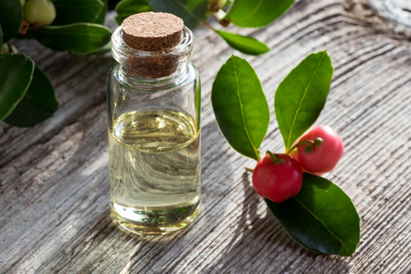 A bottle of wintergreen essential oil on white painted wood, with wintergreen berries and leaves in the background Stock Photo