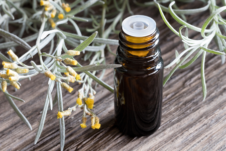A dark bottle of helichrysum essential oil with blooming helichrysum italicum on a wooden background