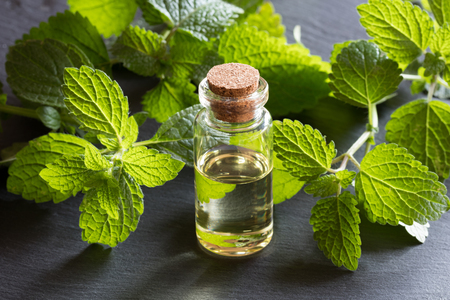 A bottle of melissa (lemon balm) essential oil with fresh melissa leaves on dark background