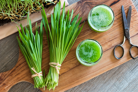 Two glasses of barley grass juice with freshly harvested barley grass, top view