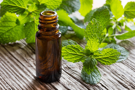 A dark bottle of melissa (lemon balm) essential oil with fresh melissa twigs in the background