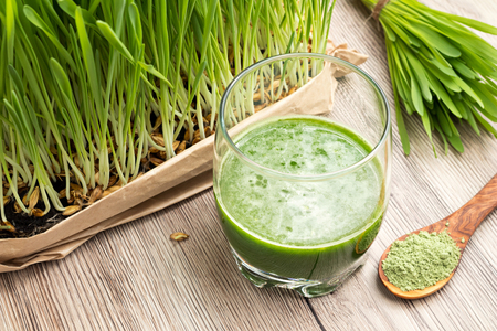 A glass of barley grass juice with young homegrown barley grass and green barley powder in the background