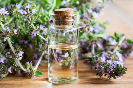 A bottle of Breckland thyme (thymus serpyllum) essential oil with fresh blooming Breckland thyme twigs