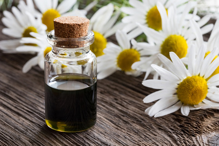 A bottle of dark blue chamomile essential oil with fresh blooming chamomile on a wooden background