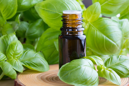 A bottle of basil essential oil with fresh basil twigs on a wooden background Stock Photo
