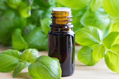 A dark bottle of basil essential oil with fresh basil leaves Stock Photo