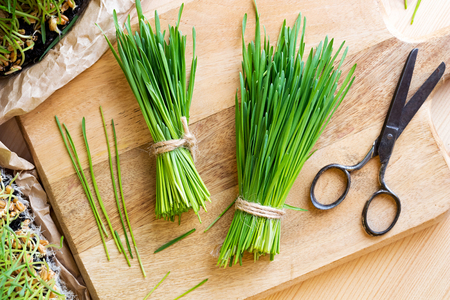 Freshly harvested wheatgrass and scissors on a wooden cutting board, top view Stock Photo