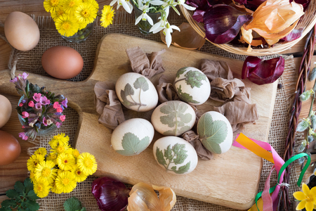 Preparation of Easter eggs for dying with onion peels: eggs with a pattern of fresh herbs, onion peels, coltsfoot, lungwort, snowdrops and yellow crocuses in the background. Top view. Stock Photo