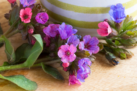 Closeup of lungwort (pulmonaria) flowers on a wooden table