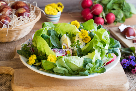 Spring salad with lettuce, corn salad, radishes, eggs and wild edible plants - coltsfoot, daisy, lungwort flowers, chickweed, young dandelion leaves