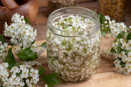 A jar filled with fresh hawthorn blossoms and alcohol, to prepare herbal tincture