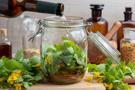 Preparation of homemade liver tonic by pouring white wine over fresh greater celandine leaves and roots in a glass jar