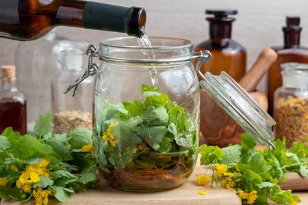 Przygotowanie domowego toniku wątrobowego przez polanie białego wina na świeże liście i korzenie glistnika większego w szklanym słoiku Zdjęcie Seryjne