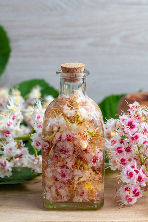 Preparation of homemade tincture from horse chestnut blossoms and alcohol, with copy space