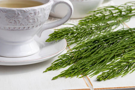 Fresh horsetail twigs with a cup of herbal tea in the background
