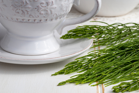Fresh horsetail twigs with a cup of tea in the background Stock Photo