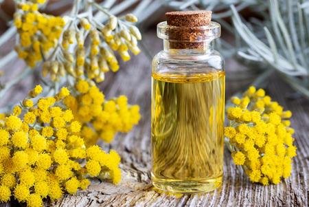 Eine Flasche ätherisches Öl mit frisch blühender Helichrysum Italicum Pflanze