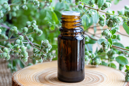 A bottle of essential oil with fresh blooming marjoram twigs