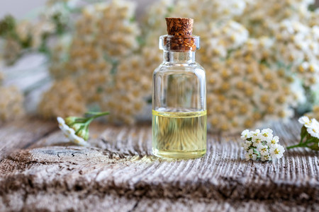 A bottle of essential oil with fresh blooming yarrow twigs in the background