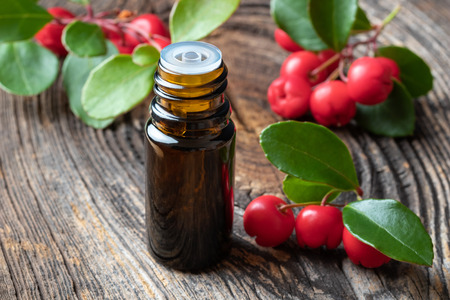 A bottle of essential oil with fresh wintergreen twigs oon a wooden background