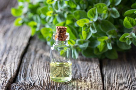 A bottle of essential oil with fresh oregano twigs Imagens