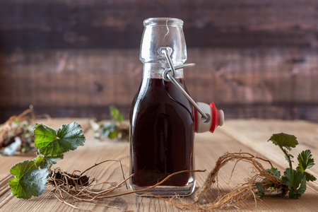 Bottle of red wine in which roots of young Geum urbanum plants have been macerated, according to an old recipe of Hildegard of Bingen Standard-Bild