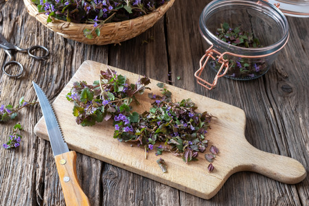 Cutting up blooming ground-ivy twigs to prepare homemade herbal syrup against cough Banco de Imagens