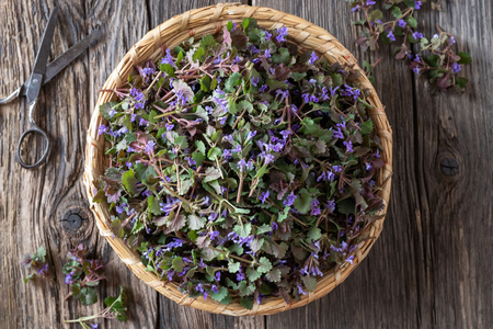 Fresh blooming ground-ivy in a basket, top view Banco de Imagens - 122803332