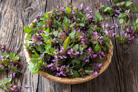 Fresh purple dead-nettle flowers in a basket Banco de Imagens - 122803533