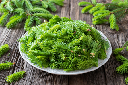 Spruce tips collected on a plate to prepare homemade herbal syrup