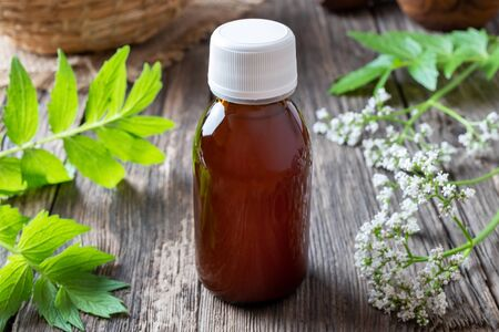 A bottle of herbal tincture with fresh blooming valerian plant Reklamní fotografie