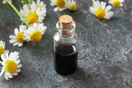 A bottle of dark blue German chamomile essential oil and blooming plant