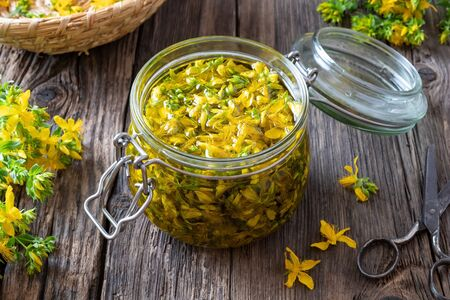 St. Johns wort flowers macerating in olive oil in a glass jar on a table