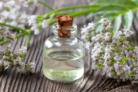 A bottle of essential oil with fresh blooming valerian twigs Reklamní fotografie