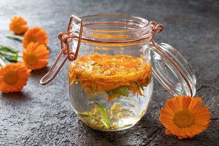 Preparation of herbal tincture from fresh calendula flowers Reklamní fotografie