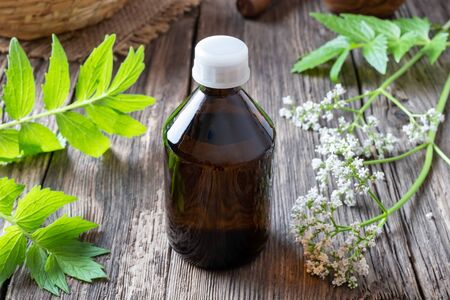 A bottle of herbal tincture with fresh blooming valerian plant on a table Reklamní fotografie