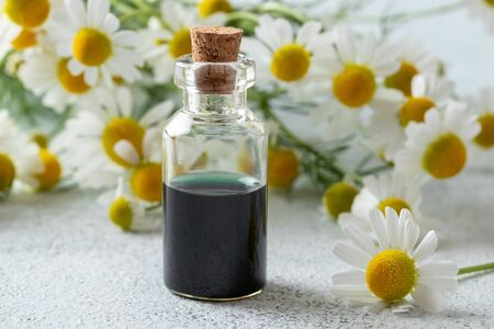 A bottle of dark blue German chamomile essential oil and fresh flowers on a bright background