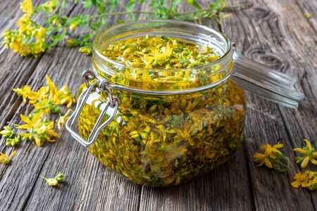 Preparation of St. Johns wort oil from fresh blooming Hypericum perforatum plant