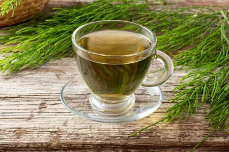 A cup of herbal tea with fresh horsetail plant Stock Photo